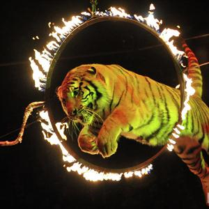 Цирки Красково