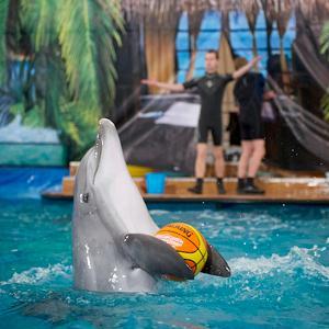 Дельфинарии, океанариумы Красково