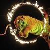 Цирки в Красково