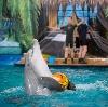 Дельфинарии, океанариумы в Красково