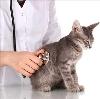 Ветеринарные клиники в Красково